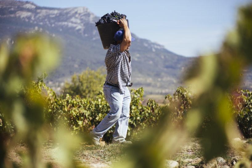 Vendimia en La Rioja