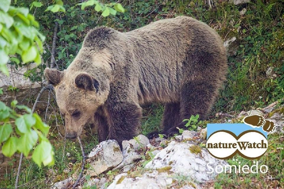 Naturwatch Somiedo